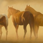 "Cees Penning - ""Bracing the Storm"", 18x36, $6600"