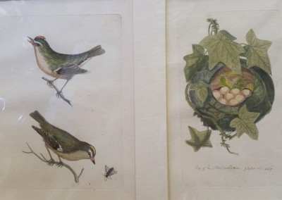 "Bolton, James - ""The Gold Crowned Wren"", Pl. 65 & 66, Engraving, $910"