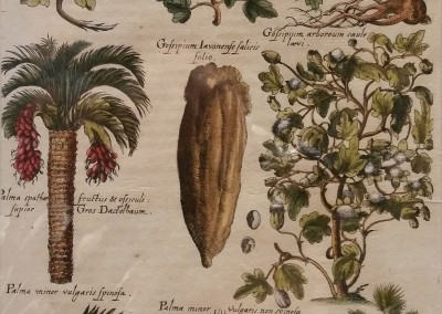 DeBry Palms and Fruit, Pl XLIV 1611 Engraving $1300