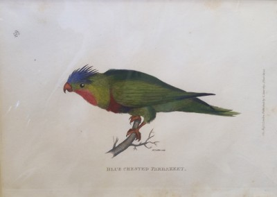 "Shaw, George (1751-1813) - ""Blue Crested Parrakeet, Pl. 69"", General Zoology, Steel Engraving, 1811, $230"