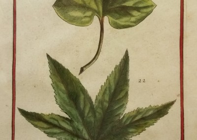 "Unknown - ""Two Leaves, Tab. 454"", Engraving, Ca 1700, $120"