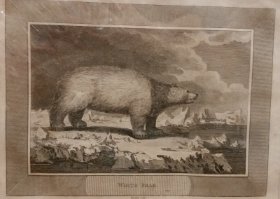 "Unknown - ""White Bear"", Ca 1790, Engraving, $130"