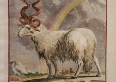 Buffon (1707-1788) Le Belier Valachien Pl 7 Ca 1755 $210