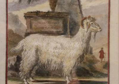 Buffon (1707-1788) Le Chevre D'Angora Pl 9 Ca 1755 $210