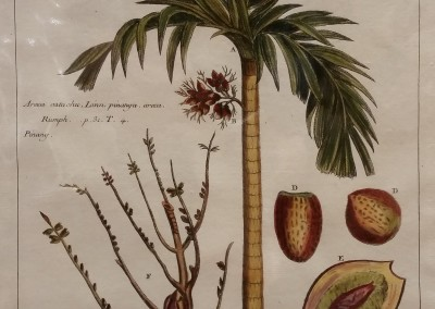 "Buchoz - ""Palm, Pl. V"", $910, 1770, Engraving"