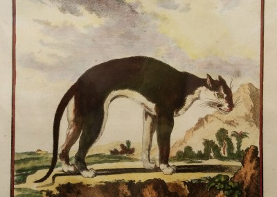"Buffon (1707-1788) - ""Le Cougar Noir, Pl. 42"", Engraving, Ca 1755, $210"