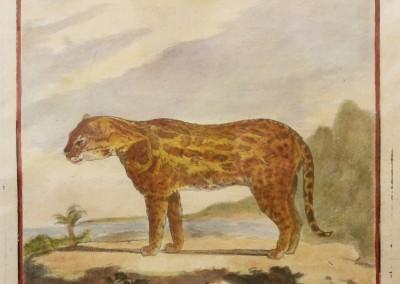 "Buffon (1707-1788) - ""Le Jagua, Pl. 31"", Engraving, Ca 1755, $210"