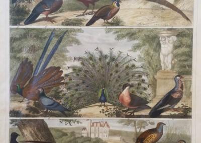 "Heck, G. - ""Birds, Pl. 96"", Engraving, 1851, $200"