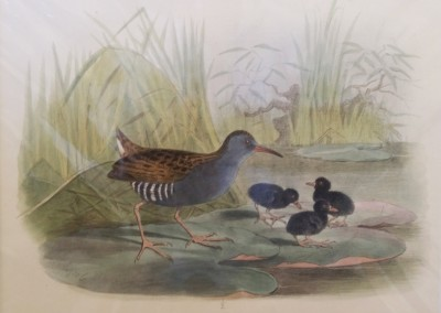 """Keuleman, J.G - """"Water-Rail"""", Hand Colored Stone Lithograph, Ca 1885, $260"""