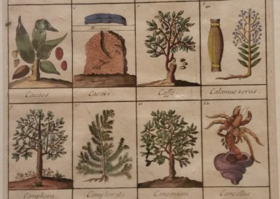 Lemery Nicolo Dictionary of Herbs Pl V Ca 1700 Engraving BO 0027 $390