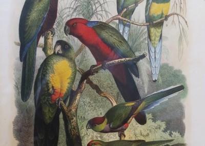 """Reichenow - """"Vogelbilder aus fernern Zonen, Pl. 16"""", Hand Colored Stone Lithograph, Ca 1880, $300"""