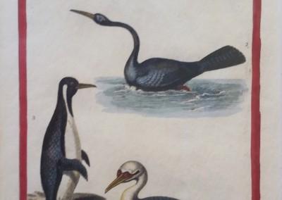 "Shaw, George (1751-1813) - ""Waterbirds, Pl. 54"", Engraving, 1825, $80"