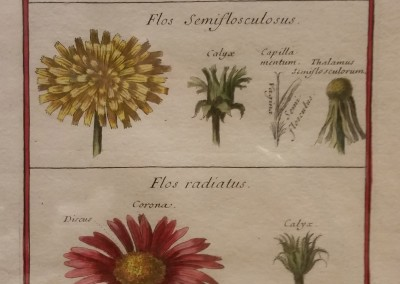 Unknown Floral Sampler III Ca 1700 Engraving $120