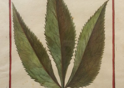 "Unknown - ""Leaf, Tab. 456"", Engraving, Ca 1700, $120"