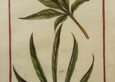 "Unknown - ""Leaves, Tab. 457"", Engraving, Ca 1700, $120"