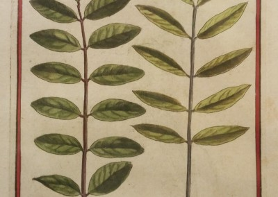 "Unknown - ""Leaves, Tab. 458"", Engraving, Ca 1700, $120"
