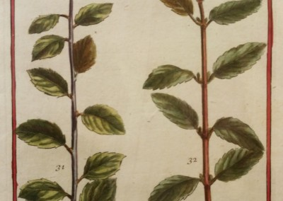 "Unknown - ""Leaves, Tab. 461"", Engraving, Ca 1700, $120"
