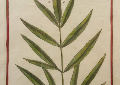 "Unknown - ""Linqua Cervina Follis Costre"" Ini. Engraving, Ca 1700, $130"