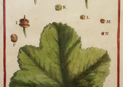 "Unknown - ""Malva Leaf"", Engraving, Ca 1700, $100"