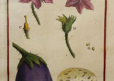 "Unknown - ""Melongena"", Engraving, Ca 1700, $160"