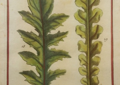 "Unknown - ""Two Leaves, Tab. 452"", Engraving, Ca 1700, $120"