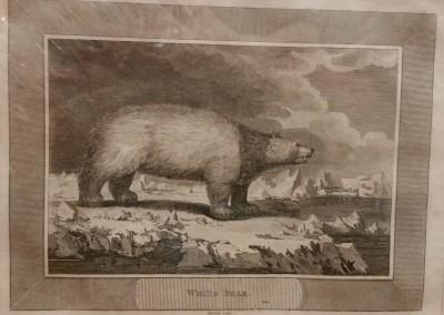 "Unknown - ""White Bear"", Ca 1790, Engraving, $130"